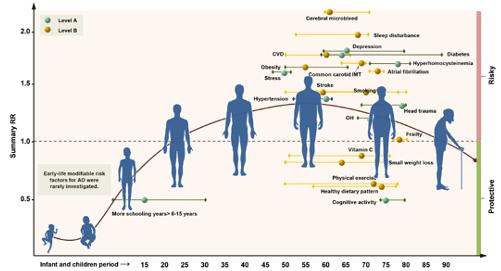 Représentation des différents facteurs de risque et facteurs protecteurs de maladie d'Alzheimer